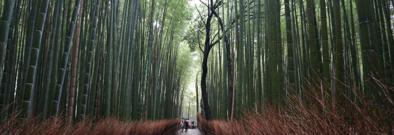 Japan Kyoto Bamboo bos